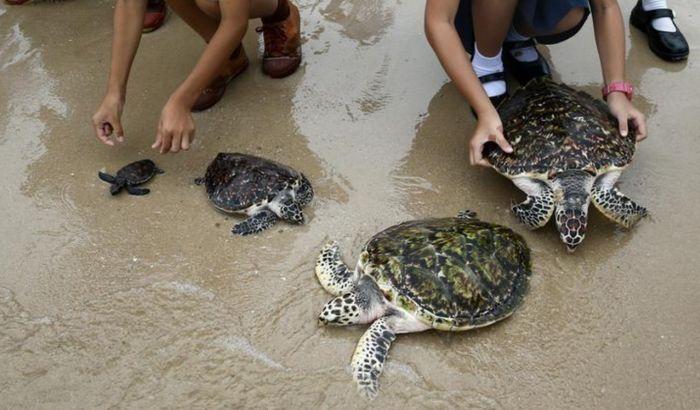 VIDEO: 1066 kornjača pušteno u more za kraljev rođendan