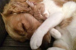 Naučnici: Psi su pametniji od mačaka