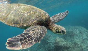 Ronilac u Kotoru ubio morsku kornjaču nakon molbe da se ne uznemiravaju