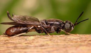 Zašto je opasna hrana na koju je sletela muva