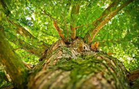 Dodaju prah od drveta u namirnice da budu zdravije