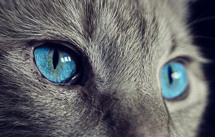Zašto mačke imaju uspravne zenice?