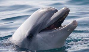 U ribarskim mrežama nastradalo 119 delfina duž rumunske obale