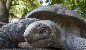 Džinovska kornjača pobegla iz zoo vrta, ponovo