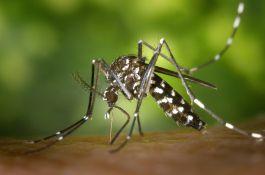 Azijski tigrasti komarci prvi put pronađeni u Novom Sadu