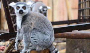 Nakon požara, zoo vrt u Londonu ponovo otvoren