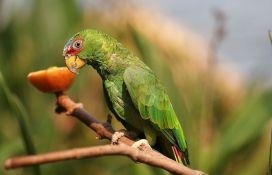 Švercovali papagaje u džakovima za krompir