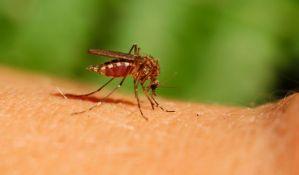 Virusa Zapadnog Nila za sada nema u Novom Sadu