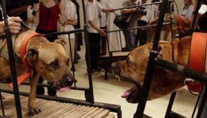 VIDEO: Gugenhajm dobio pretnje, morao da povuče sporne radove sa životinjama