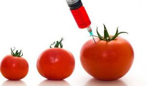 Ljajić: Moraćemo da omogućimo promet GMO proizvoda