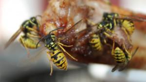 Pčele i ose: Između ljubavi i mržnje