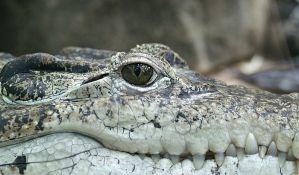 U reci u Nemačkoj zabranjeno kupanje zbog krokodila