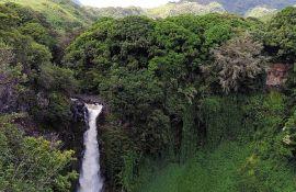 U 2018. godini nestalo 12 miliona hektara tropskih šuma