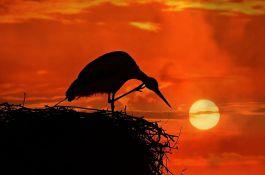 Šest saveta kako da zaštitite gnezda ptica