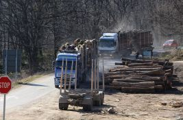 Zašto raste cena sečenog drveća u Srbiji?