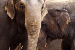 Slonice se gurale u zoo vrtu, posetioci morali da budu evakuisani