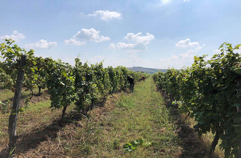 Udruženje traži očuvanje Karlovačkih vinograda: Zabraniti prljave energente u ciglani
