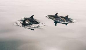 Ugroženi delfini u kanalu Lamanš