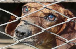 Aktivisti za prava životinja za nedelju zakazali protest u centru Novog Sada