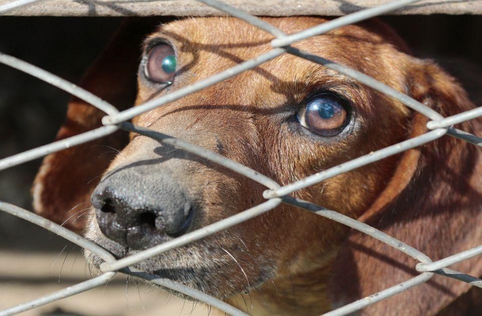 Aktivisti za prava životinja sutra protestuju u centru Novog Sada