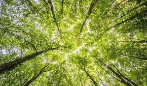 Traže da se zasadi 50.000 stabala u Novom Sadu u naredne četiri godine