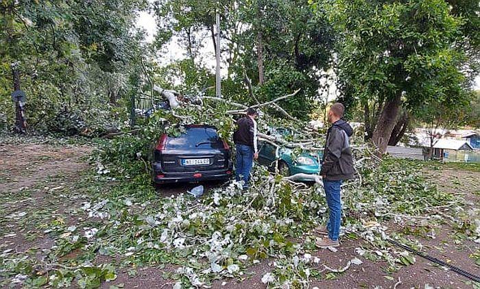 FOTO: Topola pala na automobile na Ribarskom ostrvu