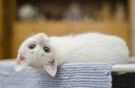 Ruski gradić dobio šeficu mačaka