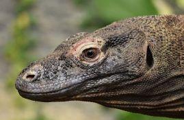 Turisti će plaćati 1.000 dolara da vide Komodo zmajeve