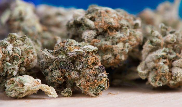 Zaplenjeno više od 500 kg marihuane u Severnoj Makedoniji