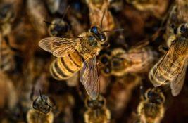 Muškarca u Arizoni na smrt izbole pčele, još nekoliko ljudi povređeno