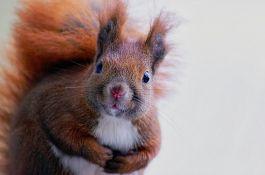 Stanovnici Njujorka imaju problema sa agresivnim vevericama