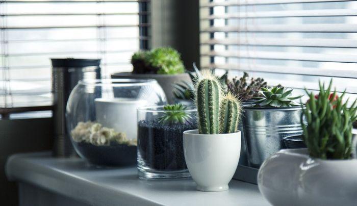 Deset kućnih biljaka koje će preživeti i uz minimalnu negu
