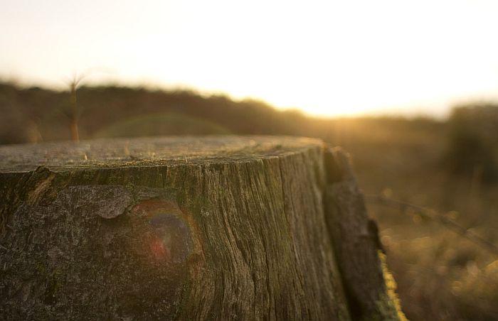 Nepogode, biljne bolesti i čovek uništili 113 hiljada kubnih metara drva u Srbiji