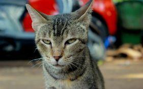 Mačka korišćena za šverc hašiša