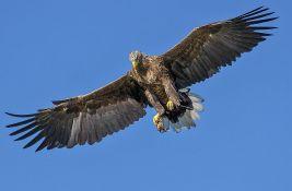 Evropska crvena lista: Svakoj petoj vrsti ptica preti izumiranje