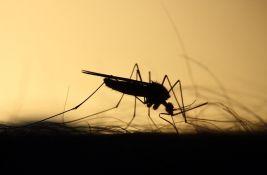 Komarci u Beogradu zaraženi virusom Zapadnog Nila