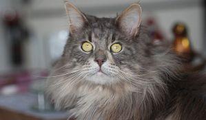 Mačak u Italiji ima britanski soj kovida