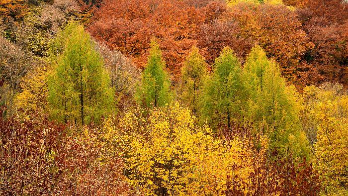 Sadnjom 60.000 sadnica obeležava se 60 godina Nacionalnog parka Fruška gora, građani pozvani da učestvuju