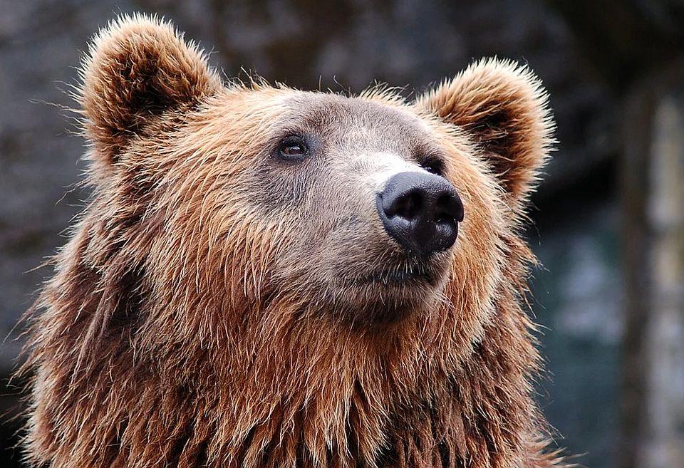 Turista traži odštetu od 15.000 dolara zbog medveda u kanti za smeće