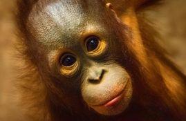 Najmanje 30 majmuna stradalo u požaru u nemačkom zoo vrtu