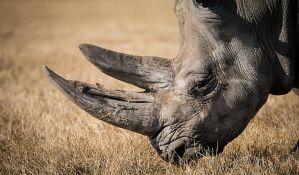 Pas pronašao krijumčarene rogove nosoroga vredne 1,7 miliona dolara