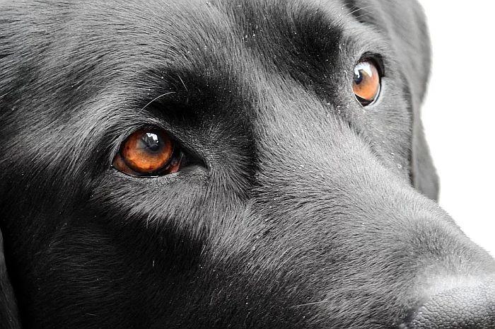 Carina dobija još jednog službenog psa