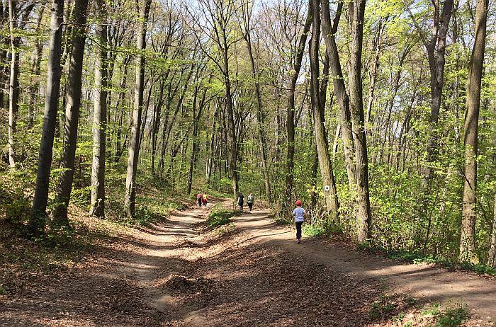 Darko Rundek protiv seče šume na Fruškoj gori