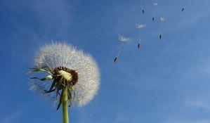 Naučnici identifikovali biljne molekule koji usporavaju starenje ćelija