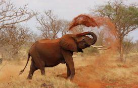 Većina zemalja za zabranu prodaje divljih slonova zoo vrtovima