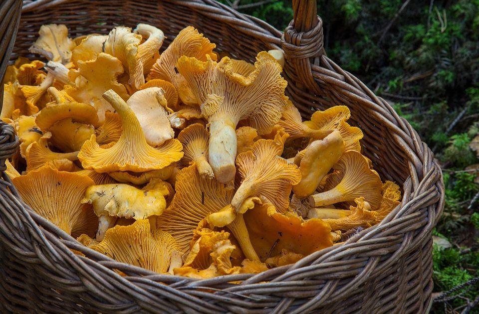 Austrijske gljive i dalje radioaktivne