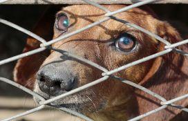 Kineski grad Šendžen zabranio jedenje pasa i mačaka