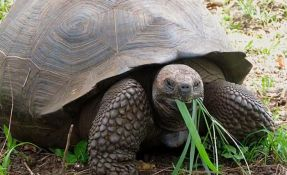 VIDEO: Pronađena kornjača za koju se mislilo da je izumrla