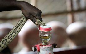 Godišnje desetine hiljada ljudi umre od ugriza otrovnica