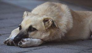 Temerin posao zbrinjavanja pasa lutalica dao firmi kojoj je bio zabranjen rad u ovom mestu